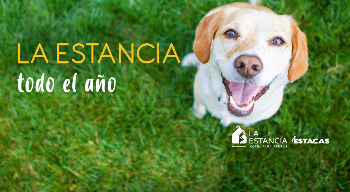 Compra en línea Hotel para perros en La Estacas, Morelos