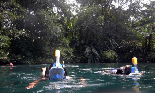 Snorkeling LE